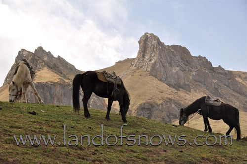 Horses grazing during a trek
