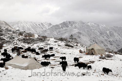 Tibetan nomads in Kham