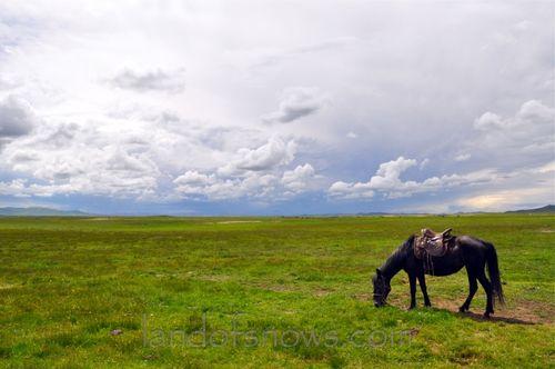 nomad grasslands