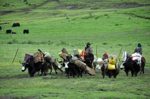 nomads on the move