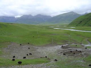 Grasslands_near_shiqu