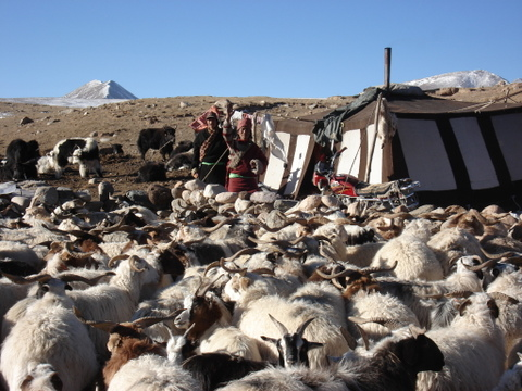 Canvas_tent_in_amdo